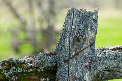 Old fence post with moss Stock Photography