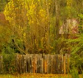 Old fence of rustic wooden boards. And back poplars are seen in an autumn landscape royalty free stock photos