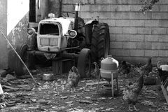 Old FIAT tractor. An old unused tractor. It is now home for some hens Stock Photo