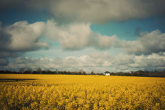 Old field view. Rapeseed field view in old school colours Royalty Free Stock Image
