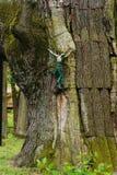 Old figure of Jesus on a tree Stock Image