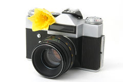 Old film camera on white with yellow narcissus Stock Photography