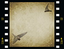 Film strip with swallows. Old film strip with swallows background Royalty Free Stock Images