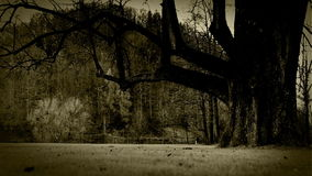 Old film stylized footage of a scary if tree on the clearing of a dense forest stock video