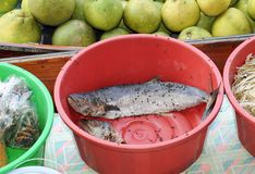 Old fish Stock Images