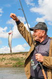 Old fisherman and his catch - zander Royalty Free Stock Images