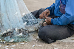 Old Fishermen clearing fisherman net , a lot of small fish Royalty Free Stock Image