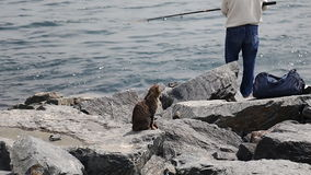 An old fishermen fishing in Istanbul with cat stock footage