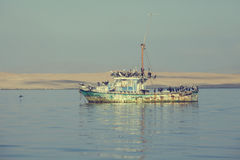 Old fishing boat filled with pelicans Stock Photo