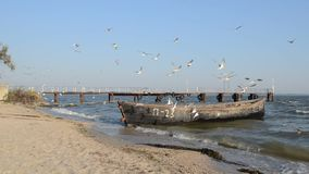 An old fishing boat moored to the shore. Waving on the waves. On the cobbled shore of the Black Sea estuary. Flying seagulls catching fish stock video