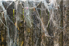 Is an old fishing net Stock Images