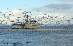 Old fishing trawler in Alaska. Old commercial fishing trawler heading out to sea in the Kachemak Bay near Homer, Alaska in winter surrounded by seagulls and Royalty Free Stock Image