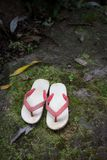 Old flip flops in forest Stock Images