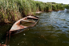 Old flooded boat in the reeds. Stock Photography