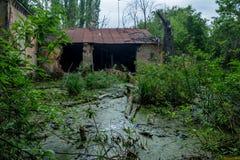 Old flooded overgrown ruined abandoned forsaken building among bog after the flood disaster Stock Image