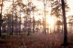 Old Florida sunrise royalty free stock photography