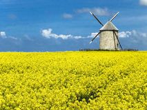 The old flour mill. In the field of yellow flowers Stock Photos