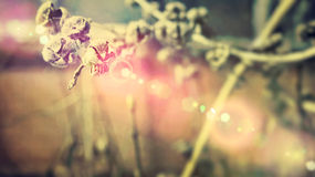 Old flower. An old flower is in the light Royalty Free Stock Photo