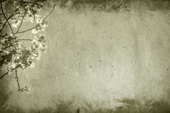 Old and flower paper texture background Royalty Free Stock Image