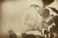 Old flower paper texture background. Sepia tone royalty free stock image