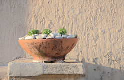Old flower pot Stock Images