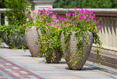 Old flowerpots on the park Royalty Free Stock Photo