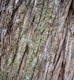 Old foetid juniper forest on an island golem grad , lake prespa, macedonia Royalty Free Stock Photo