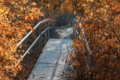 Old foot bridge in autumn forest Royalty Free Stock Photos
