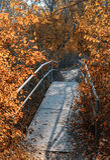 Old foot bridge in autumn forest Stock Photo