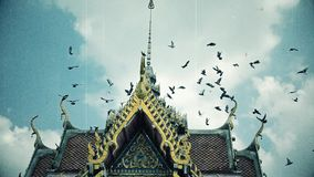 Old footage retro film grain cinema of a flock of pigeon birds flying toward the top of the Thai buddhism temple gable in HD size stock video footage