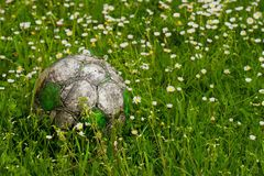 Old football ball hidden in the high grass flower and weed filed Stock Photo