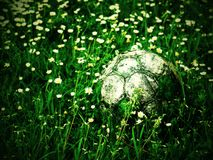 Old football ball hidden in the high grass flower and weed filed Stock Images