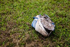 Old football boot rots on grass