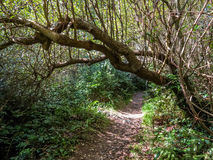 Old footpath in the shady forest Stock Images