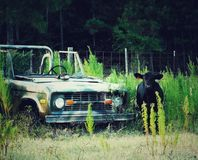 Old Ford Bronco stock photos