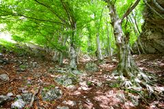 Old forest Royalty Free Stock Images