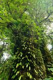 Old Forest, green tropical forest at Doi Inthanon National Park, vertical color and ant view image Royalty Free Stock Photography
