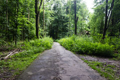 Old forest in the heart of the city Royalty Free Stock Photography