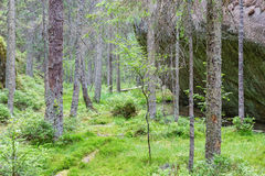 Free Old Forest In The Wilderness Stock Photo - 57391670