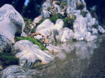 Old Forest Mountain. Mountain,Tree,Old Forest, Water Falls, Fantasty Pics Stock Images
