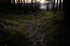 Old forest near the sea side with moss covered trees and dusk sun light in bokeh - Instant vintage square photo. Jurmala royalty free stock images