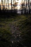 Old forest near the sea side with moss covered trees and dusk sun light in bokeh - Instant vintage square photo royalty free stock photography