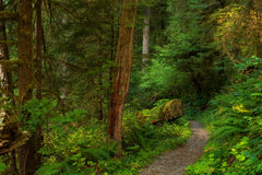 Old forest path Stock Image