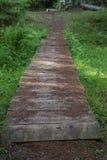 Old forest rezervation forest gren Stock Images