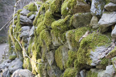 Old forest road in the Alps. Mossy old stone walls Royalty Free Stock Photography