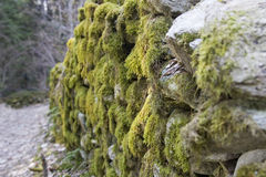 Old forest road in the Alps. Mossy old stone walls Stock Photography