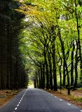 Follow your own road through the forest. royalty free stock photo