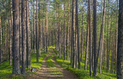 The old forest road. Royalty Free Stock Photography