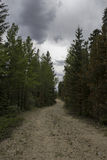 Old Forest Road Royalty Free Stock Photos