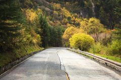 Old forest road Royalty Free Stock Images